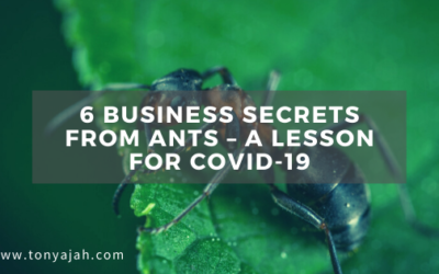 6 Business Secrets From Ants – A Lesson for COVID-19