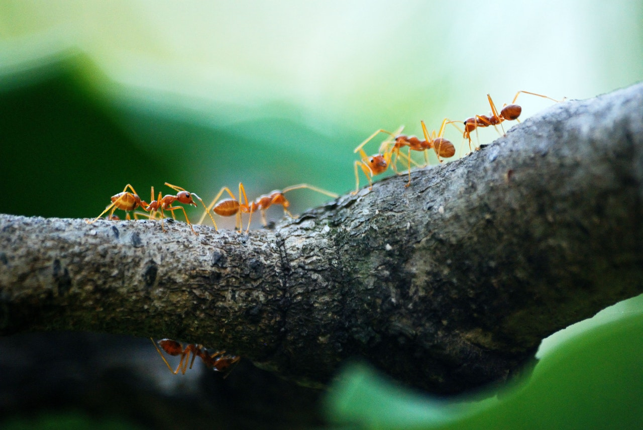 lessons from the ant-initiative